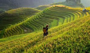 10 Best Places To Visit In Vietnam In 2021 With Photos