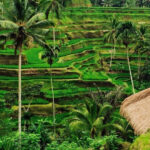 Bali Tour Packages 3 Days 2 Nights  Vacation Packages All