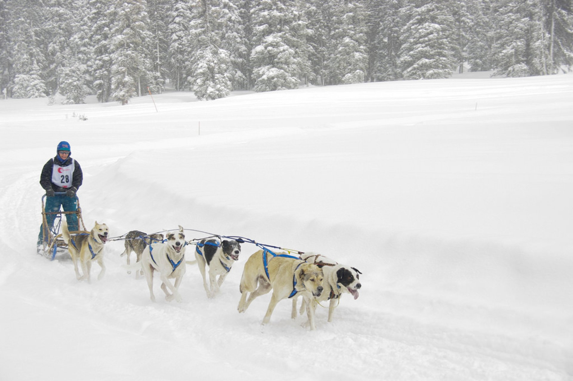 Best Time For Dog Sledding  Snow Tubing In Colorado 2020