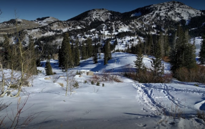 Update Police Id Skier Who Hit Tree While Trying To Avoid