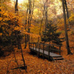 15 Of The Best Places In Illinois To Take In The Fall