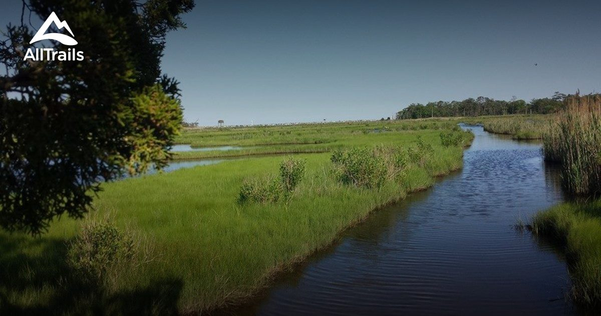 Best Trails In Cattus Island County Park  New Jersey