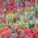 Brilliant Fall Foliage Near Midway Photographhowie Garber