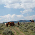 Dude Ranch Vacation Is The Way To Enjoy Ecotourism In The